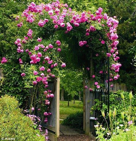 summer flowering climbers monty don grow upwards to create a spectacular vertical garden daily mail online