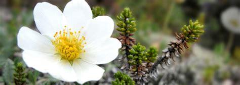 white flower varieties dreaming white flowers types of white flowers flower blog