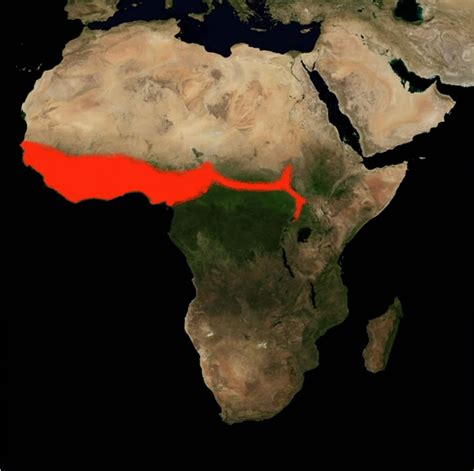 if the bp range is south of the saharan desert what is a sub saharan