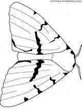 Moth Coloring Gypsy Colouring Audio Printable Stories Getdrawings Getcolorings Printables Lightupyourbrain sketch template