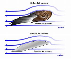 Eli5  How Do Airplane Wings Actually Work    Explainlikeimfive