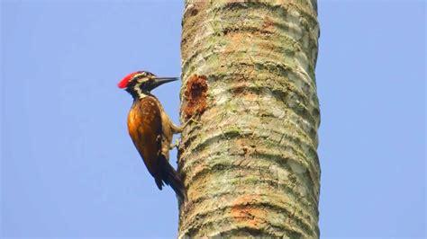 woodpecker pranks woodpecker nest in trees instrumental wi doovi