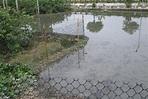 2009 02 17 22 27 20090217開始作放鴨至田間的圍籬