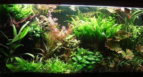 am 233 nagement id 233 e d 233 co aquarium eau douce