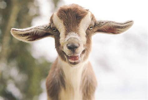 fotos de animales mas felices  te contagiaran una