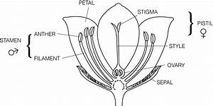 Mr  Surprenant U0026 39 S Science Classroom    Flower Dissection