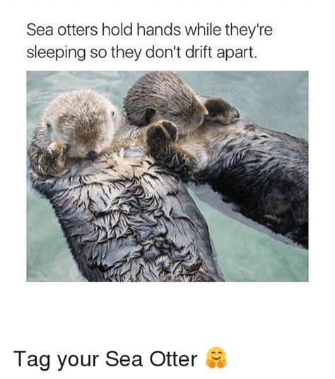 Sea Otter Meme - 25 best memes about otters otters memes