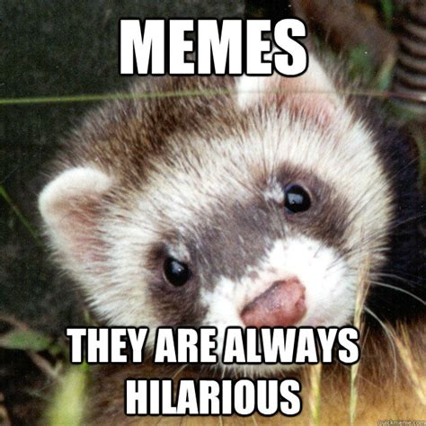 Ferret Memes - memes they are always hilarious inaccuracy ferret