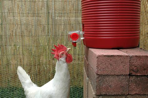 Chicken Waterer: BriteTap Chicken Waterer & The Value of ...