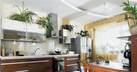 decorate kitchen  green indoor plants  save money