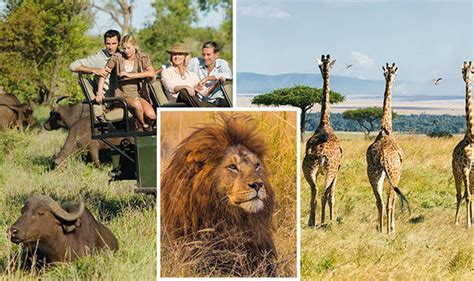 Best Safaris In Kenya Safari Holidays In Africa Serengeti Is Best Animal