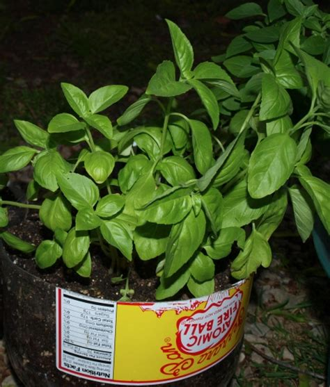 mosquito repellent for gardens 6 easy to grow mosquito repellent plants for your garden zing blog by quicken loans