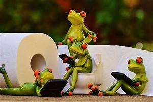 Frosch Bilder Lustig : kostenloses foto frosch toilette klo sitzung kostenloses bild auf pixabay 1037257 ~ Whattoseeinmadrid.com Haus und Dekorationen