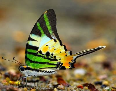 animal cognizance butterfly beauty photo layout