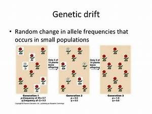 Biology 16 2 Evolution As Genetic Change 1