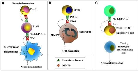 Pd-1/pd-l Signaling In Ischemic Stroke. Pd-1/pd-l