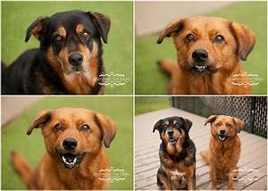 Dogs For Adoption At The Wake County Spca Raleigh Dog