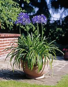 Immergrüne Pflanzen Winterhart Kübel : k belpflanzen berwintern kein frust durch frost karl ~ Lizthompson.info Haus und Dekorationen