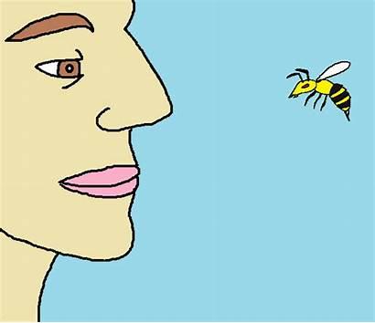 Bee Cross Promote Social Pollinate Ways Onlyloudest