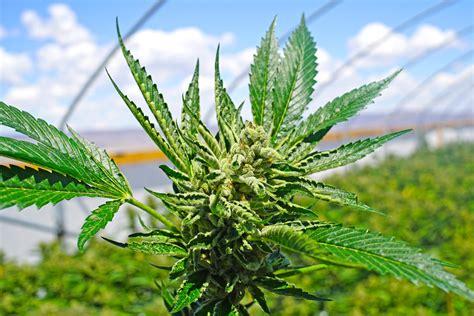 2 More U.s. Marijuana Companies Plan To Go Public In