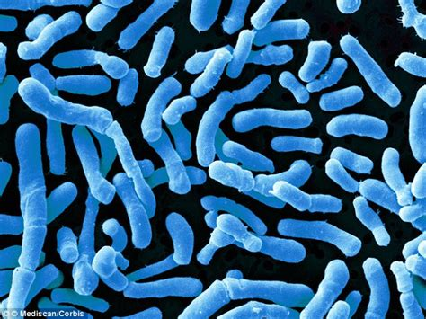 What Are Some Harmful Bacteria