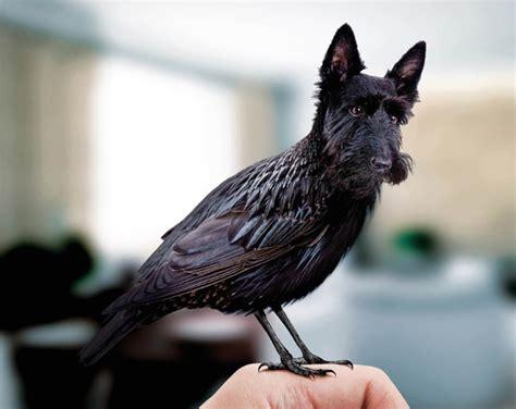 como se ven distintas aves pajaros  cabeza de perros