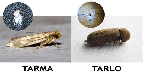 Tarme Dei Tappeti by Mettiamo Un Po Di Ordine Tra Tarli E Tarme Polignum