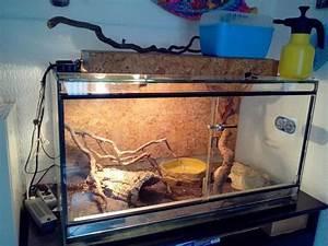 Große Reptilien Für Zuhause : das richtige zuhause f r die schlange was beim terrarium ~ Lizthompson.info Haus und Dekorationen