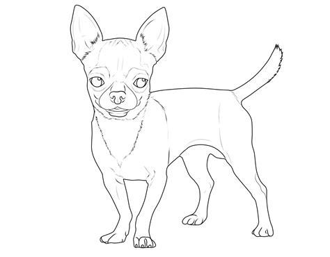 ausmalbild hunde chihuahua kostenlos ausdrucken