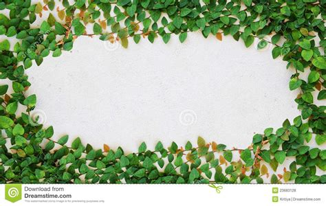concrete business cards the green creeper plant on wall royalty free stock photos