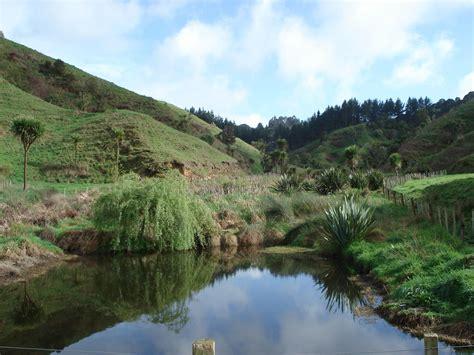 neuseeland höhle der glühwürmchen neuseeland reisebericht quot kekse backen quot