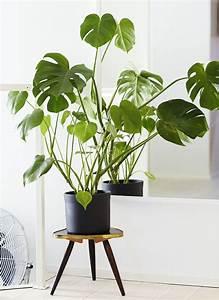 Support Pot De Fleur : porte plante et support pot de fleur int rieur de style ~ Dailycaller-alerts.com Idées de Décoration
