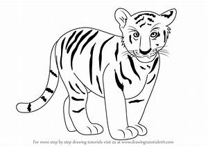Learn How to Draw Tiger Cub (Zoo Animals) Step by Step ...