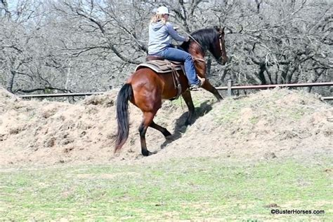 """So let's look at how much mustangs cost to insure and what you can do to get those costs down. """"Santana"""" - 14.2H, 11 year old bay BLM mustang gelding ..."""