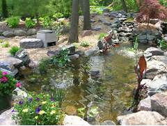 Pond1 Terrific Koi Pond And Great Place To Enjoy Nature Lauren Jolly Pond Ideas And Examples By Everything Fishy Contemporary Patio With A Koi Pond And A Little Waterfall