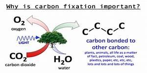 Carbon Fixation