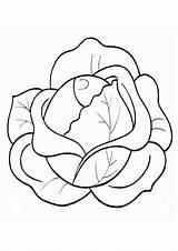 Cabbage Normal Coloring Repolho Colorir Simples Printable Desenhos Colorironline Verde sketch template