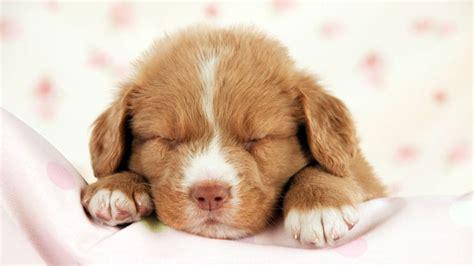 Das Sind Die Süßesten Welpen Zum Welt-hunde-tag 2017