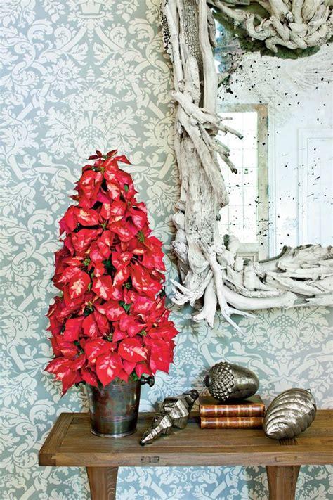 container gardening ideas  images poinsettia tree