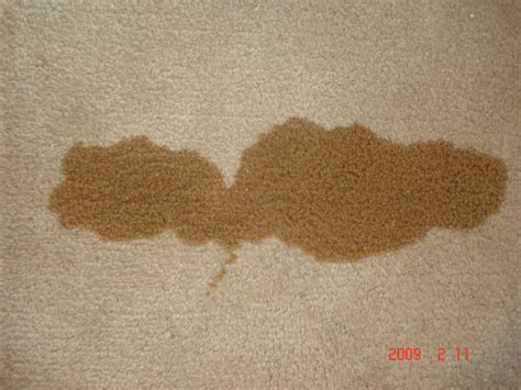 Coffee Stain Removal In Your Home Or Office In Boulder And Broomfield County Cavalry Carpet Furniture Cleaners Eden Prairie Mn Material Vray Sketchup How To Get Red Wine Stain Out Of My Local In Glendale Az Al Cleaning Colchester Ct One Rocky Mount Nc Phone Number Picking Good Suppliers Dublin Ireland