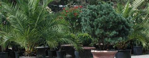 Was Ist Eine Solitärpflanze by Palmen F 252 R Die Bepflanzung Im Garten Oder Wintergarten