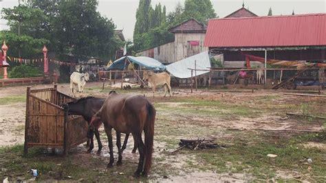 asia horses eating southeast shutterstock