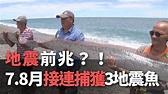 台東で巨大地震魚捕獲、地震懸念高まる - YouTube