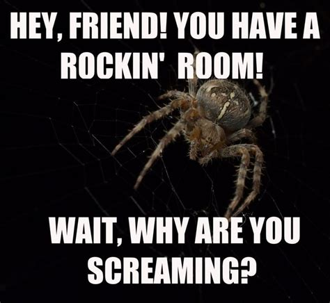 Funny Spider Meme - 93 best i hate spiders images on pinterest funny stuff funny pics and jokes