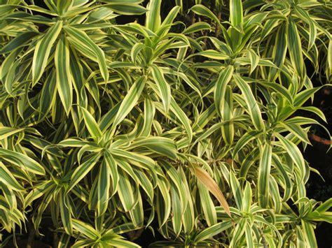 Foliage Plants Smallhomegardens2012