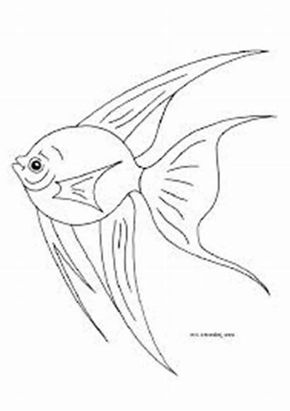 Fish Coloring Angel Angelfish Pages Tropical Nemo