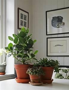 Zimmerpflanzen Feng Shui : feng shui bilder erfahren sie die bedeutung der typischen feng shui symbole ~ Indierocktalk.com Haus und Dekorationen