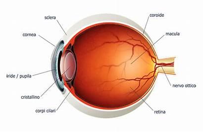 Occhio Anatomia Dell Parti Occhi Chirurgia Sclerotica