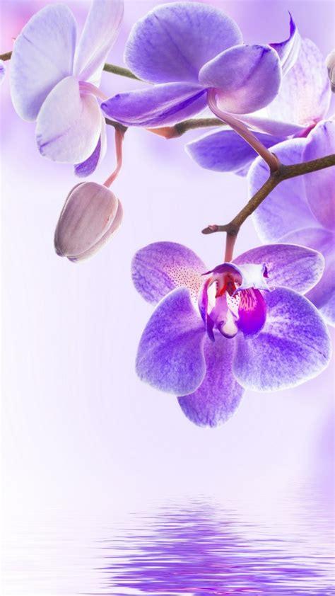 wallpaper orchid flower  nature