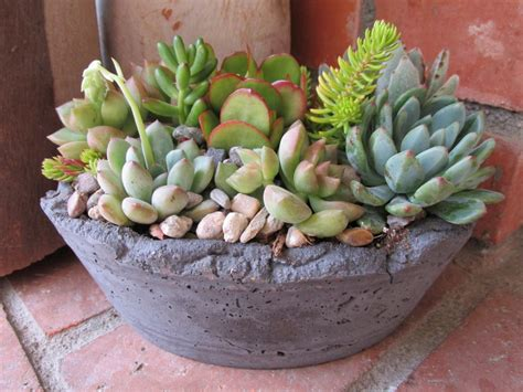 Oval Handcrafted Succulent Arrangement By Rotdcreations On